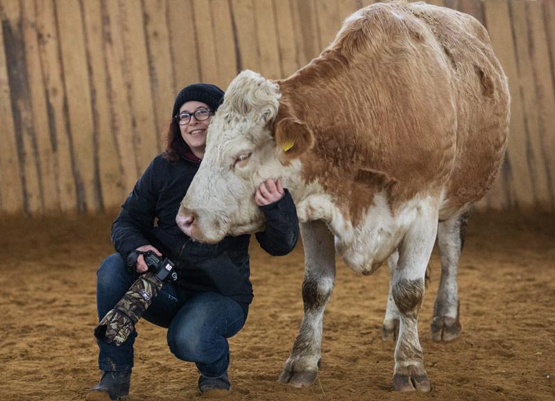 Andrea Ally Ebert – Ranchview Photography – Tierfotografie und Pferdefotografie